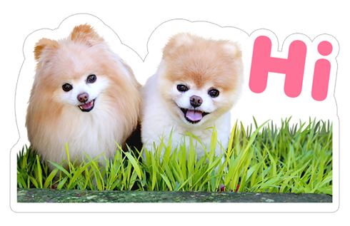 Boo The World's Cutest Dog stickers