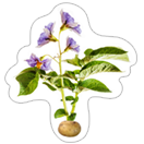 A Pack of Potatoes sticker 19