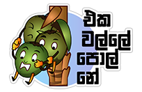 කිං Coconut sticker 15